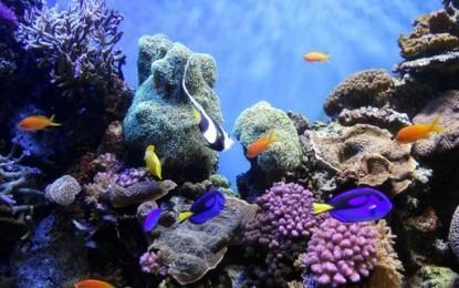 Marsa Alam, rilassarsi tra deserto e barriera corallina