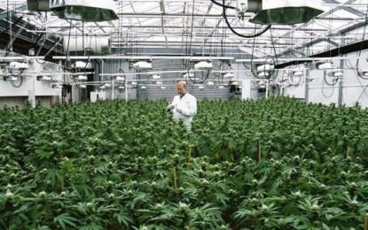 Washington: gran gettito fiscale a un anno di marijuana legale