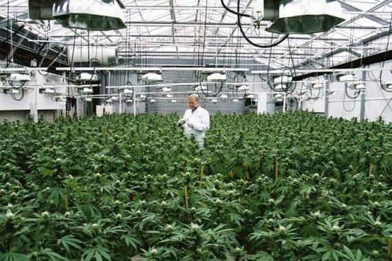 marijuana washington