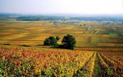 Nel cuore della Francia, i segreti della Borgogna