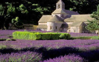 Nella Francia del Sud, con lavanda e fenicotteri