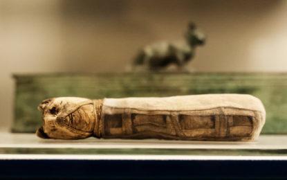 Egitto. La straordinaria scoperta di Amenofi II, una mostra avvolgente